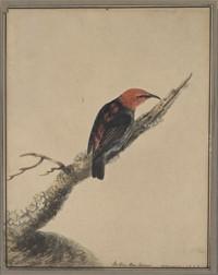 gps bird